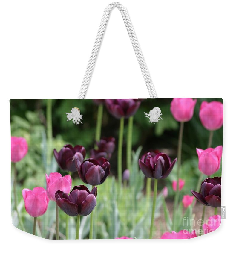 Flowers Weekender Tote Bag featuring the photograph Pink And Purple Tulips by Living Color Photography Lorraine Lynch
