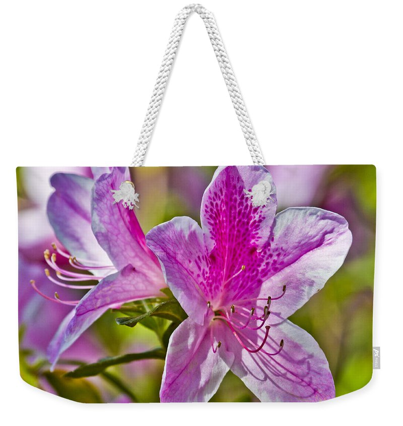Flower Weekender Tote Bag featuring the photograph Pink by Betsy Knapp