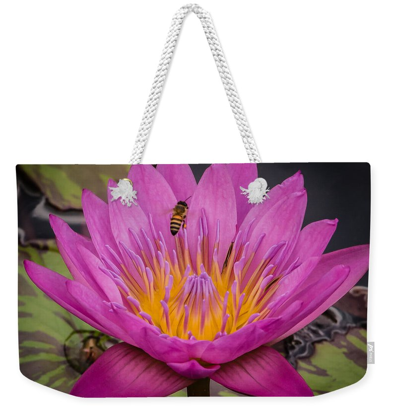 Close Up Weekender Tote Bag featuring the photograph Pink Water Lily by Sean Wray