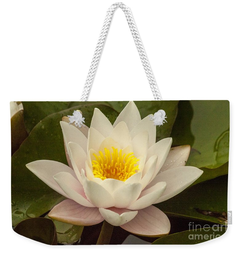 Lily Weekender Tote Bag featuring the photograph Pink Water Lily by Darleen Stry