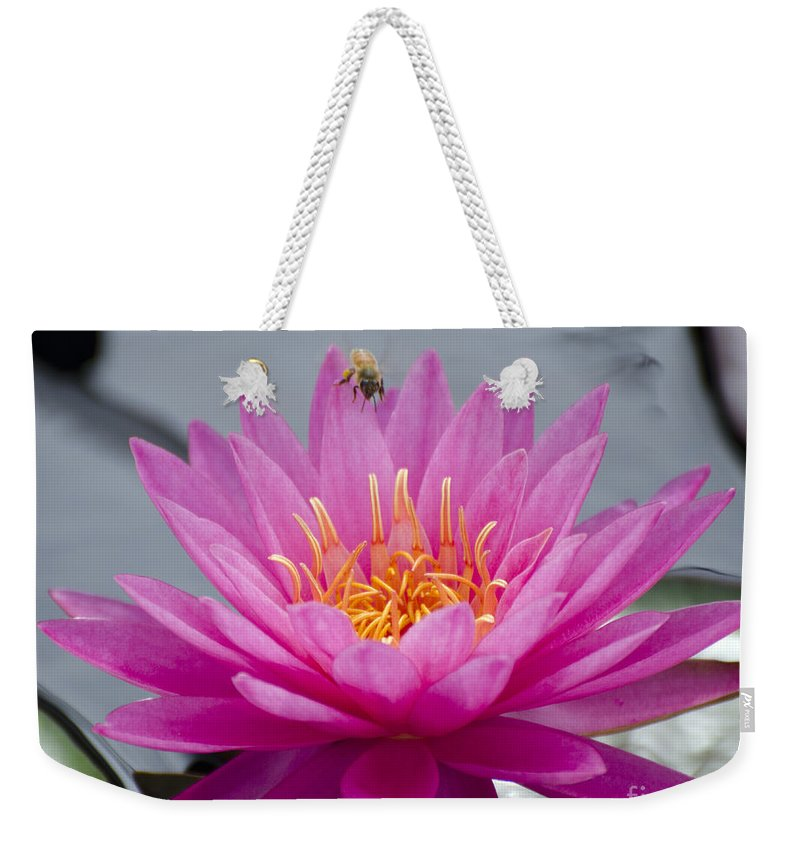 Flower Weekender Tote Bag featuring the photograph Pink Water Lily Rose Arey With Bee by Terri Winkler