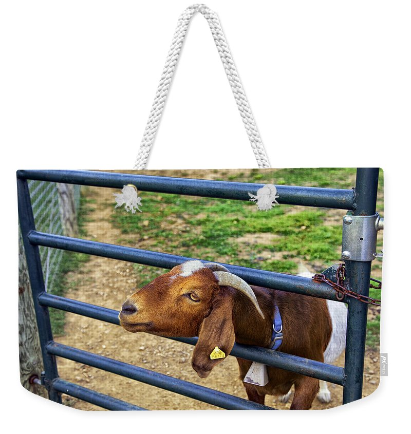 Billy Goat Weekender Tote Bag featuring the photograph Please Exonerate Me - Billy Goat by Madeline Ellis