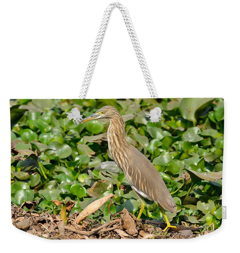 Pond Weekender Tote Bag featuring the photograph Pond Heron by Fotosas Photography