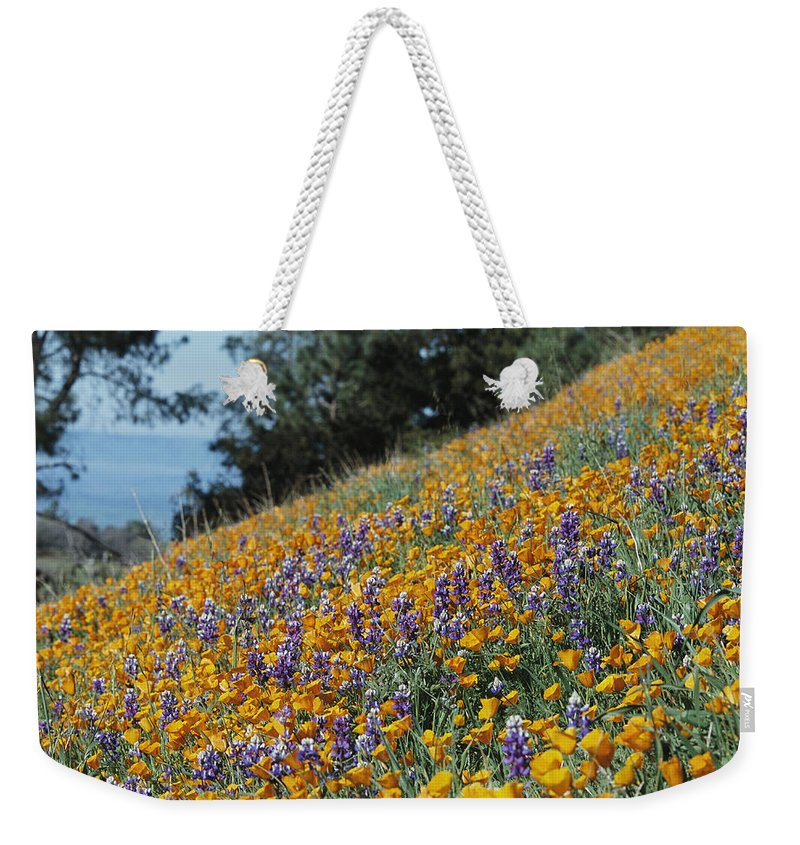 North America Weekender Tote Bag featuring the photograph Poppies And Lupine Flowers Blanket by Marc Moritsch