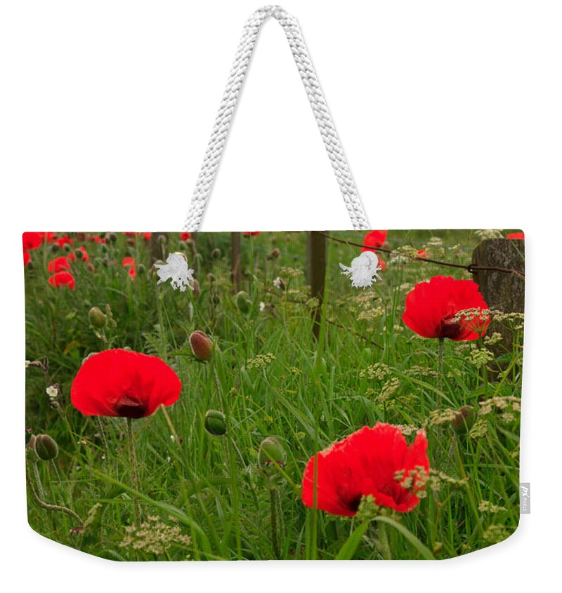 Poppies Weekender Tote Bag featuring the photograph Poppies By The Roadside In Northumberland by Louise Heusinkveld