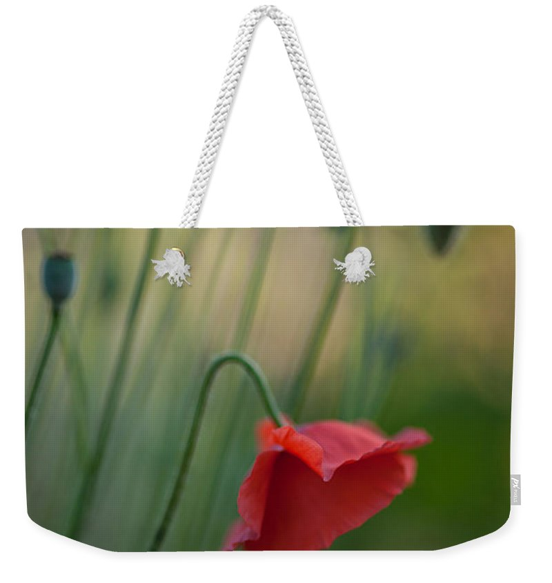 Flower Weekender Tote Bag featuring the photograph Poppies Mood by Mike Reid