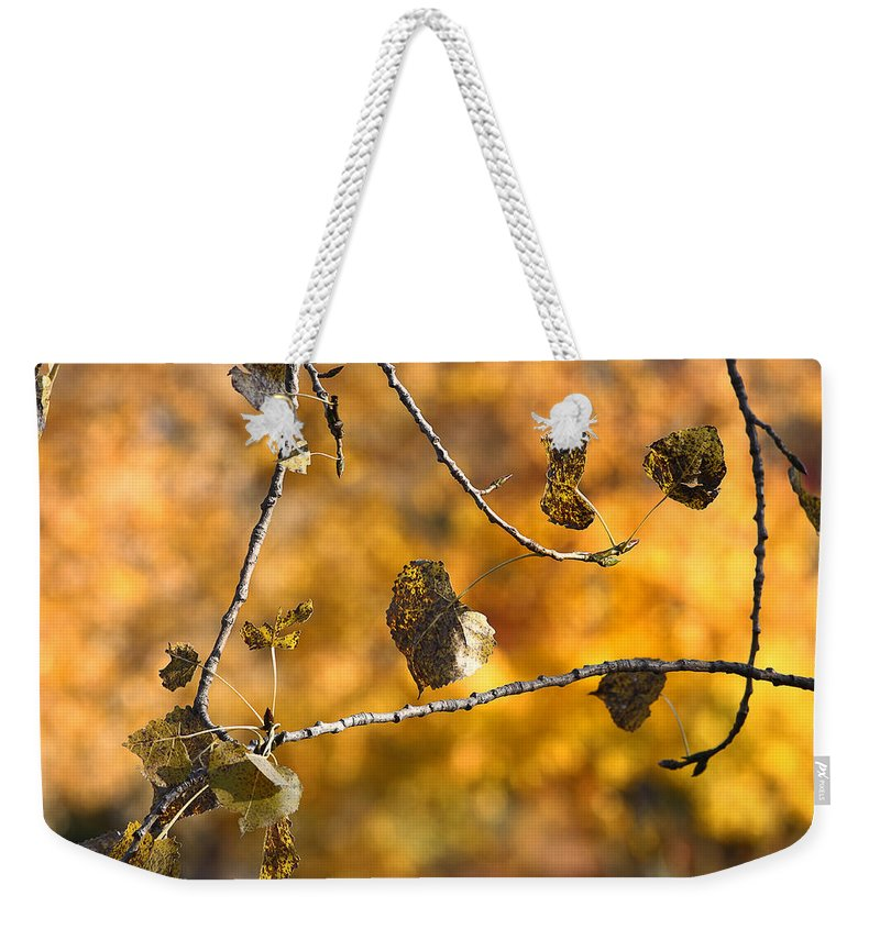 Acrylic Prints Weekender Tote Bag featuring the photograph Popular Poplar by John Herzog