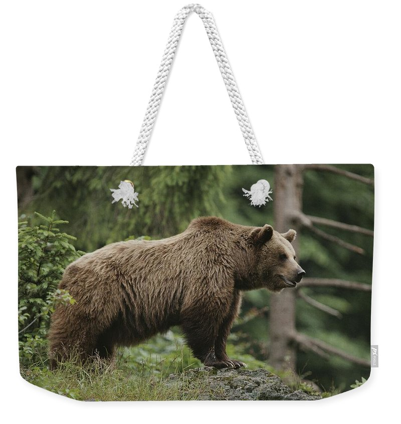 Animals Weekender Tote Bag featuring the photograph Portrait Of A Brown Bear by Norbert Rosing