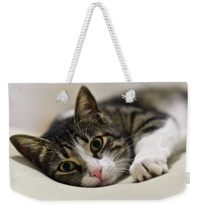 Brown Weekender Tote Bag featuring the photograph Portrait Of A Cat by Michael Goyberg