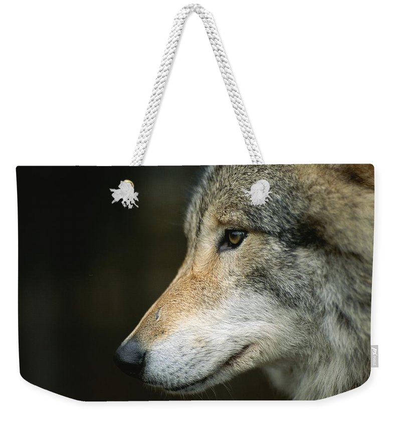 Animals Weekender Tote Bag featuring the photograph Portrait Of A Wolf by Mattias Klum