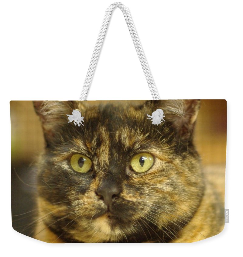 Tortoiseshell Cat Weekender Tote Bag featuring the photograph Portrait Of Ginny by Marilyn Wilson
