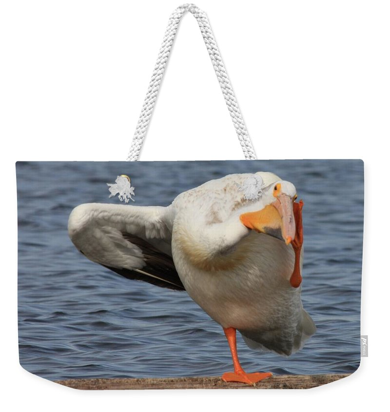 White Pelican Weekender Tote Bag featuring the photograph Poser by Shane Bechler