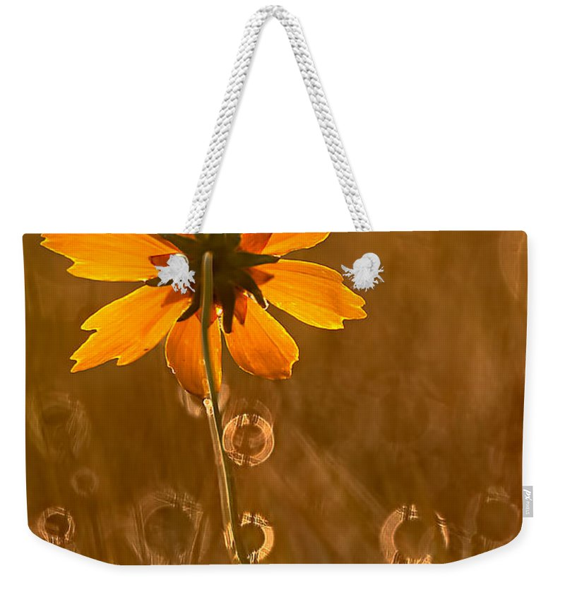 2012 Weekender Tote Bag featuring the photograph Prairie Coreopsis And Dewdrops by Robert Charity