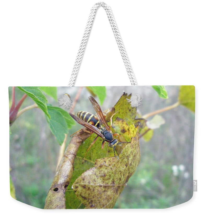 Wasp Weekender Tote Bag featuring the photograph Predatory Wasp Hunts Spider by Mother Nature