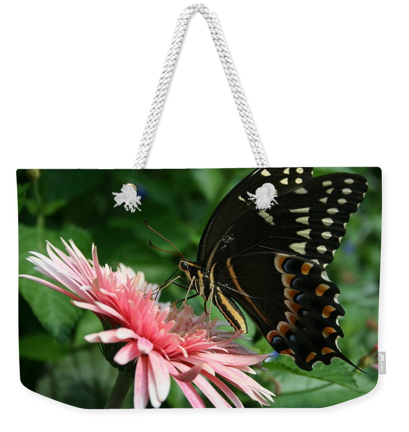 Butterfly Weekender Tote Bag featuring the photograph Pretty On Pink by Marty Fancy