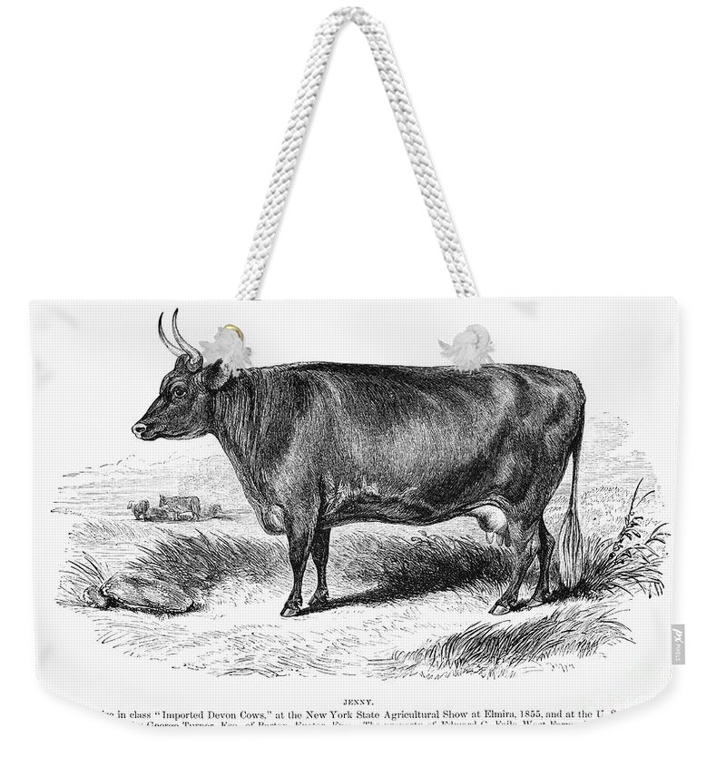 1855 Weekender Tote Bag featuring the photograph Prize Devon Cow, 1855 by Granger