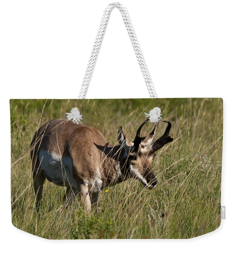Pronghorn Weekender Tote Bag featuring the photograph Pronghorn Male Custer State Park Black Hills South Dakota -3 by Paul Cannon