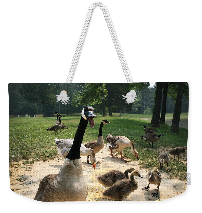 Canadian Weekender Tote Bag featuring the photograph Protective Mad Mama Canadian Goose by Kathy Clark