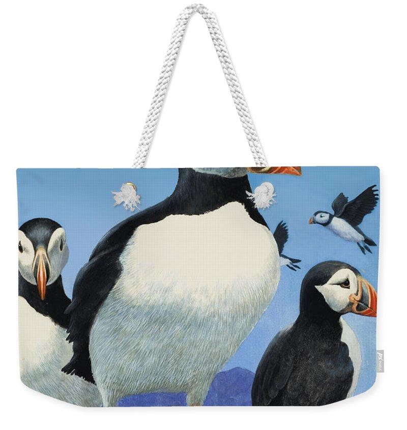 Bird; Sea; Coast; Rock; Cliff; Beak; Seabird; Coastal; Black; White; Puffin; Illustration Weekender Tote Bag featuring the painting Puffins by R B Davis