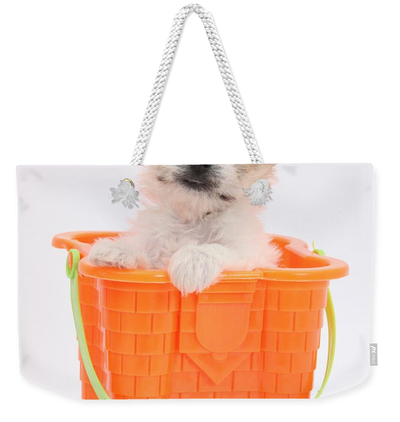 Nature Weekender Tote Bag featuring the photograph Puppy In Bucket by Mark Taylor