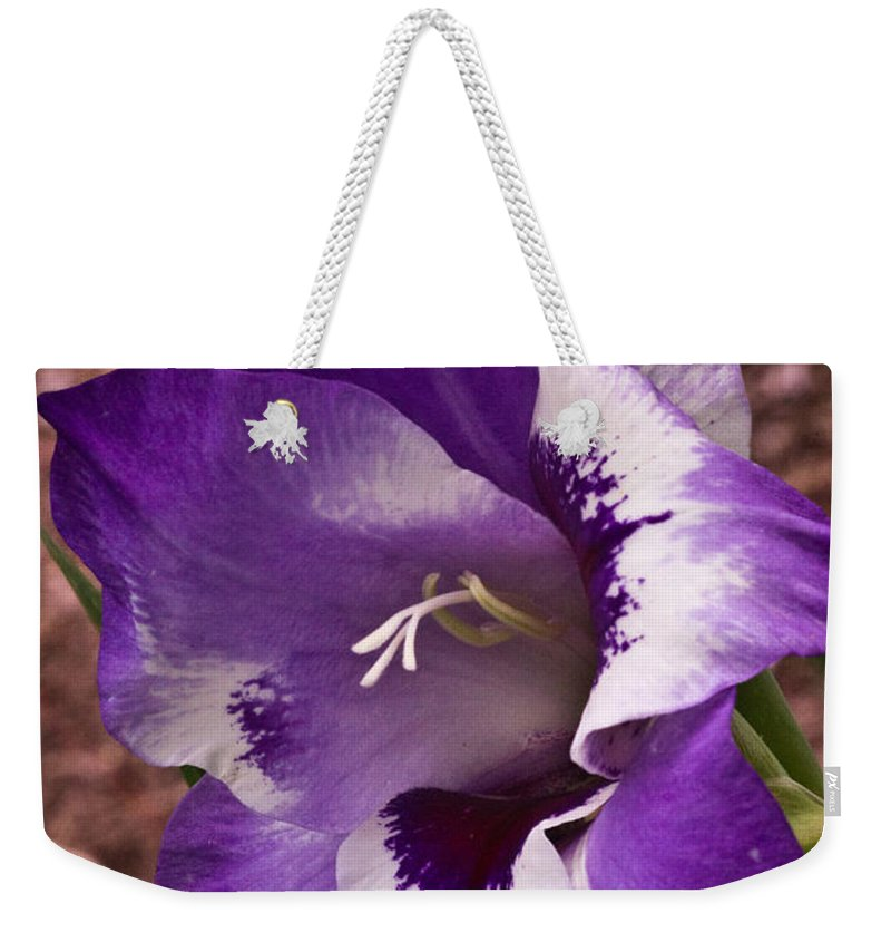 Gladiolus Weekender Tote Bag featuring the photograph Purple Gladolia by Douglas Barnett