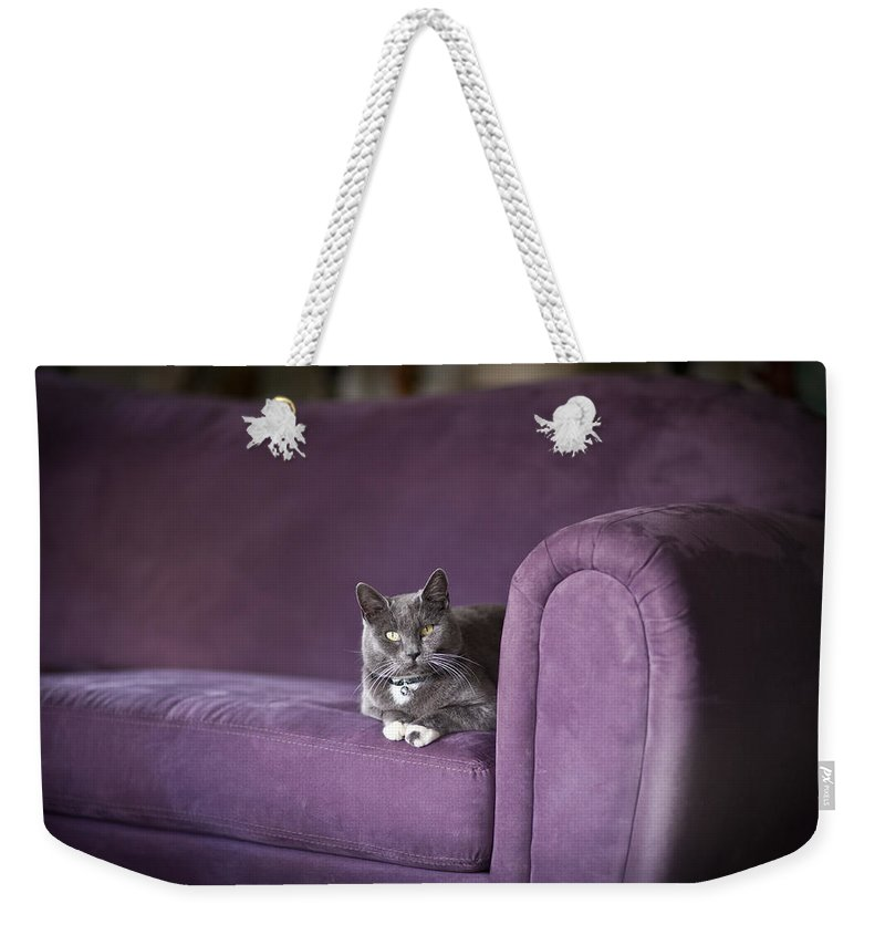 Cat Weekender Tote Bag featuring the photograph Purple Resplendent by Mike Reid