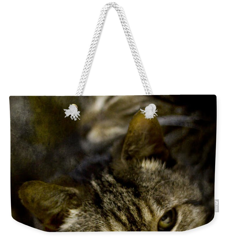 Cat Weekender Tote Bag featuring the photograph Purr by Angel Ciesniarska