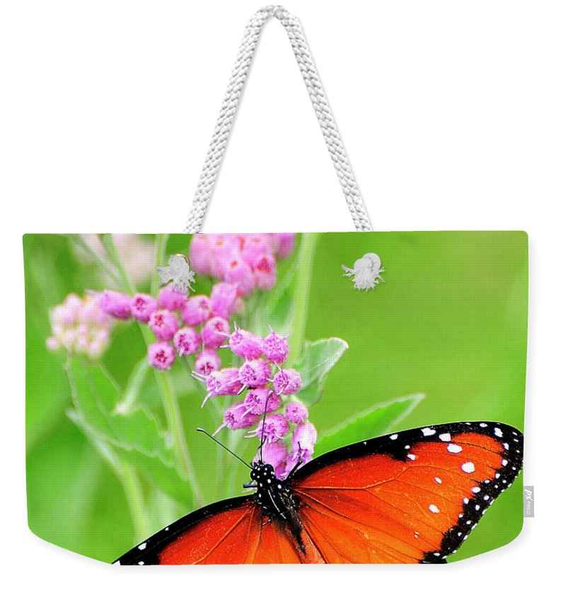Queen Butterfly Weekender Tote Bag featuring the photograph Queen Butterfly Wings With Pink Flowers by Bill Dodsworth