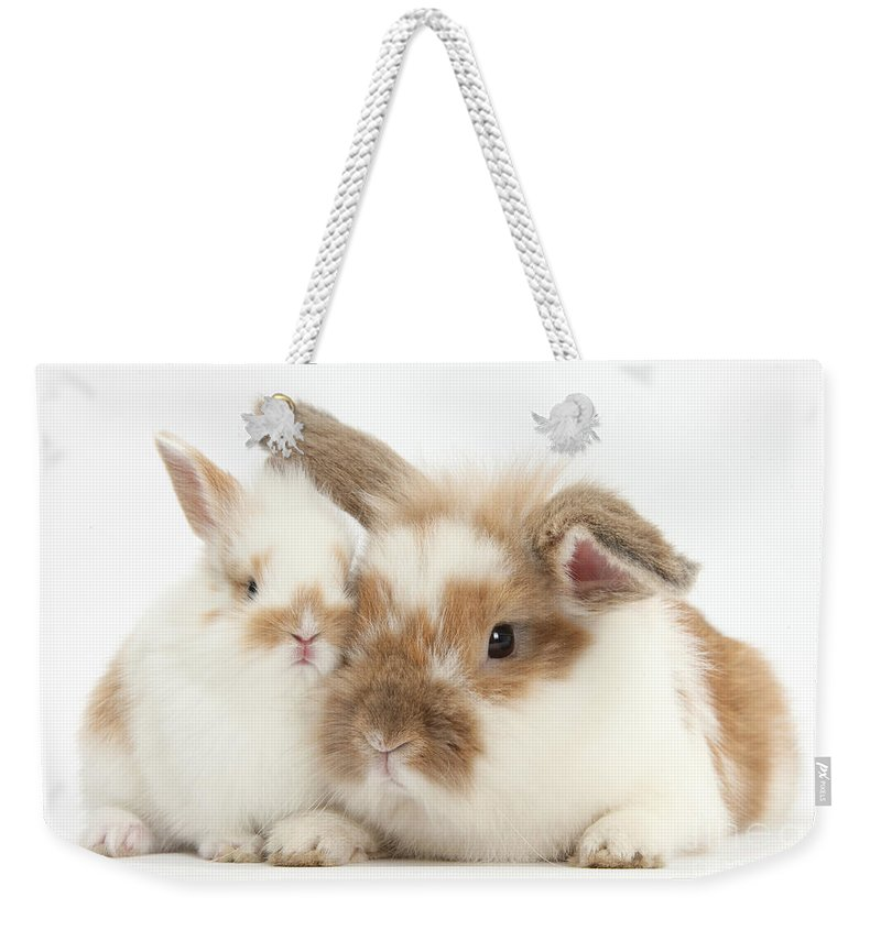 Nature Weekender Tote Bag featuring the photograph Rabbit And Baby Bunny by Mark Taylor