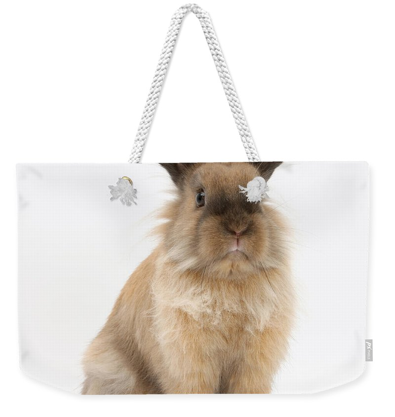 Animal Weekender Tote Bag featuring the photograph Rabbit by Mark Taylor
