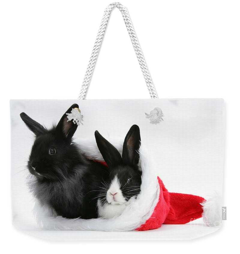 Animal Weekender Tote Bag featuring the photograph Rabbits In Hat by Mark Taylor