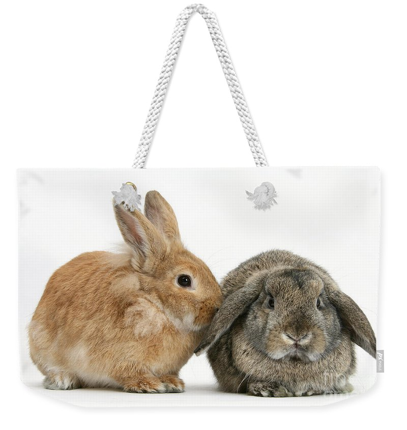 Nature Weekender Tote Bag featuring the photograph Rabbits by Mark Taylor