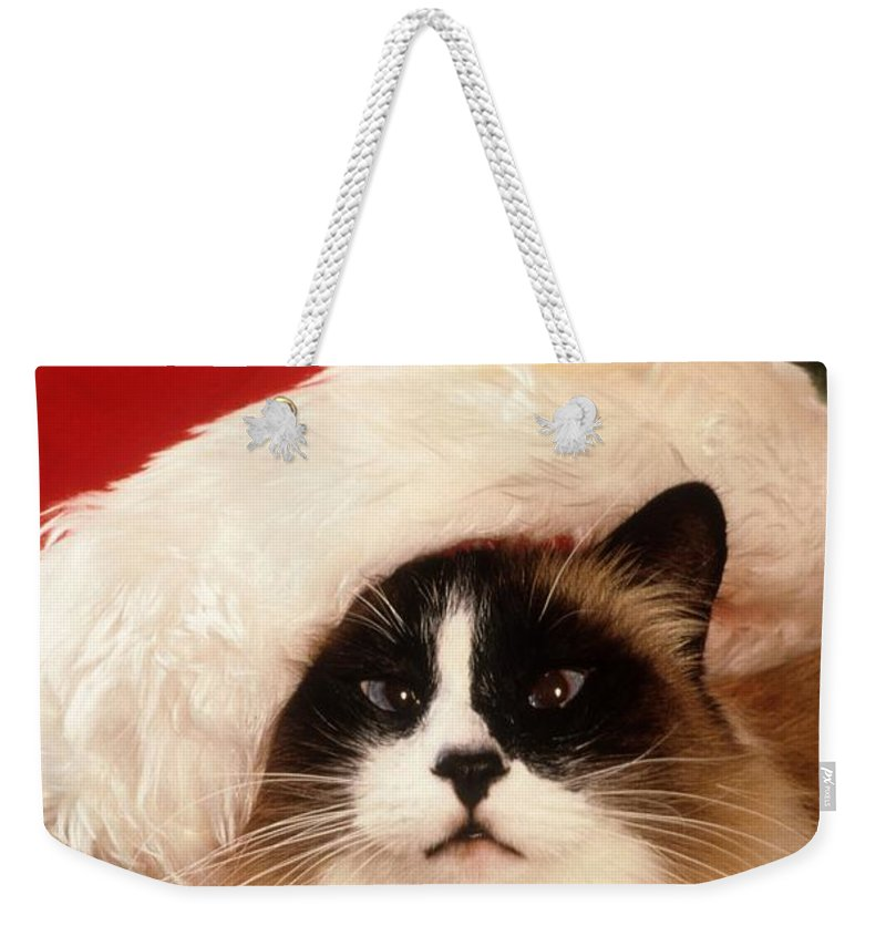 Ragdoll Weekender Tote Bag featuring the photograph Ragdoll Cat In Santa Garb by Larry Allan