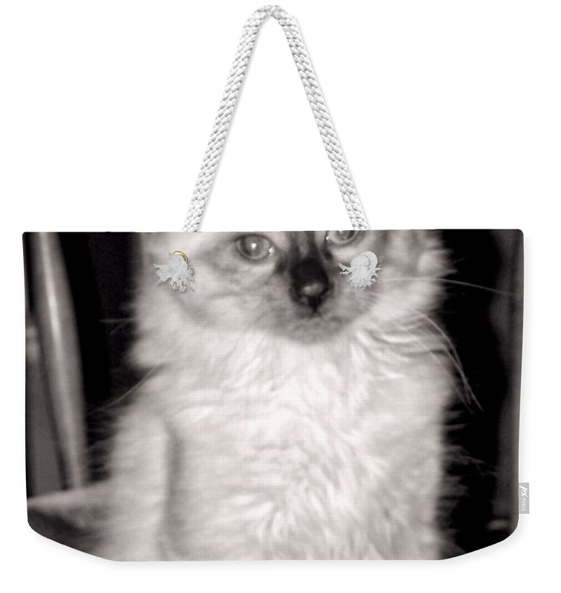 Ragdoll Weekender Tote Bag featuring the photograph Ragdoll by Christy Leigh