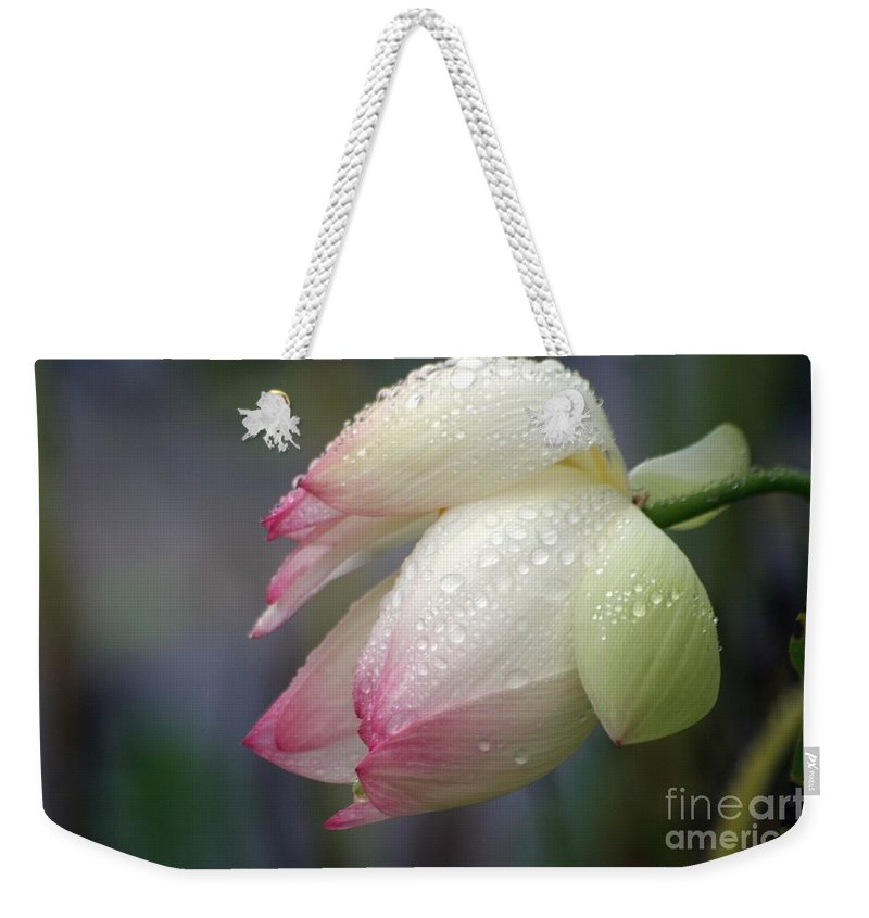 Lotus Weekender Tote Bag featuring the photograph Rained Upon by Living Color Photography Lorraine Lynch