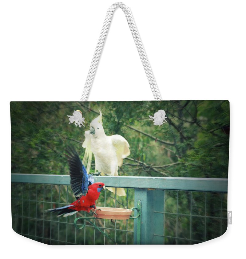 Birds Weekender Tote Bag featuring the photograph Raucous At The Feeding Bowl by Douglas Barnard