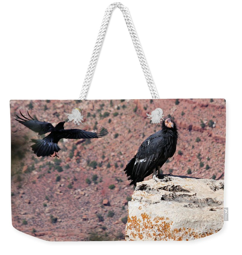 Raven Weekender Tote Bag featuring the photograph Raven Harassing Condor by Doris Potter