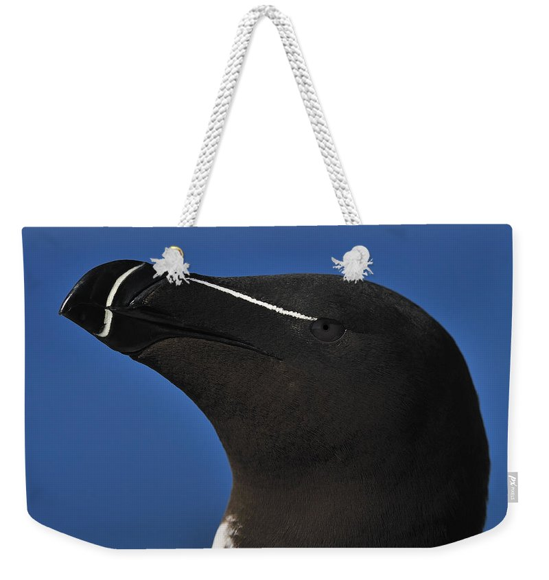 Razorbill Weekender Tote Bag featuring the photograph Razorbill Portrait by Tony Beck
