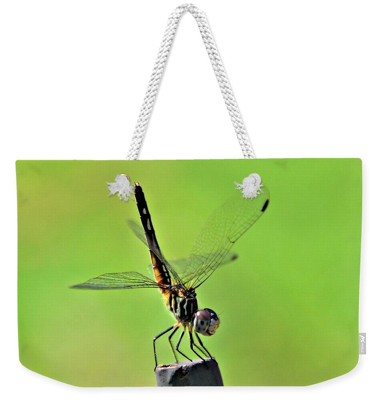 Dragonfly Weekender Tote Bag featuring the photograph Ready For Departure by Floyd Menezes