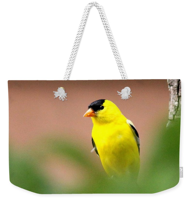 Goldfinch Weekender Tote Bag featuring the photograph Really Shy by Travis Truelove