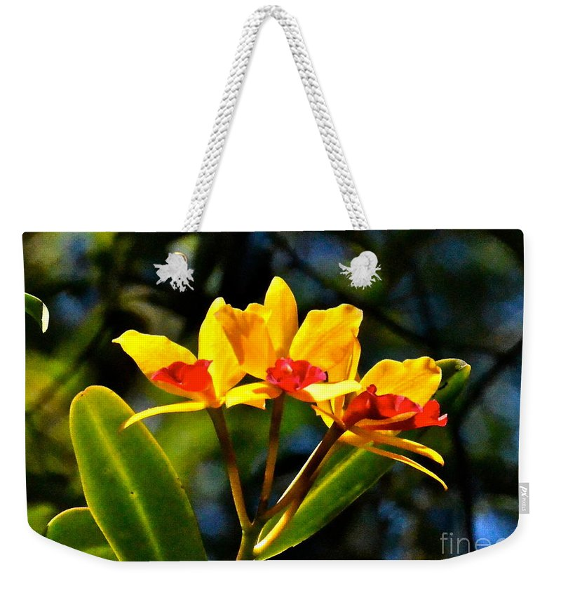 Flower Weekender Tote Bag featuring the photograph Red And Yellow Orchid by Carol Bradley