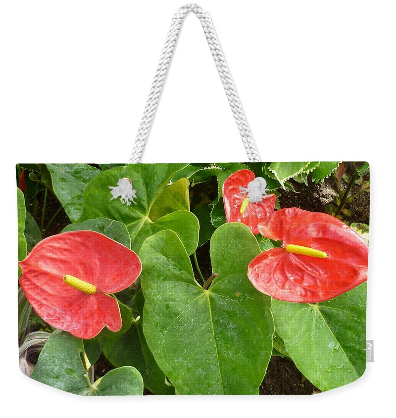 Flower Macro Weekender Tote Bag featuring the photograph Red Anthurium by Lingfai Leung