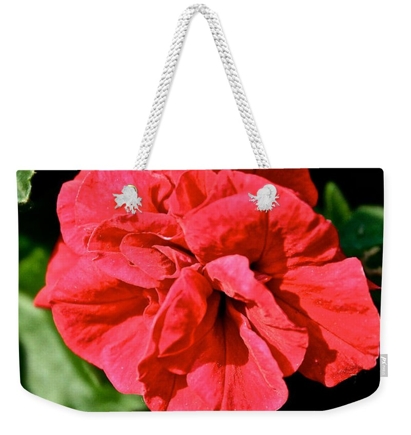 Plant Weekender Tote Bag featuring the photograph Red Begonia by Susan Herber