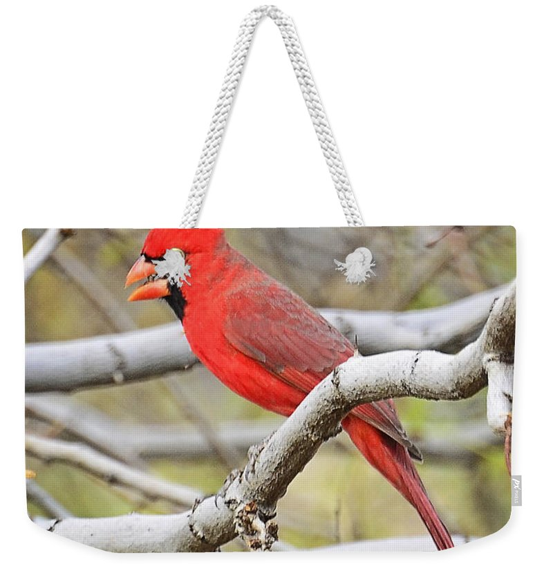 Red Cardinal Weekender Tote Bag featuring the photograph Red Cardinal by Saija Lehtonen