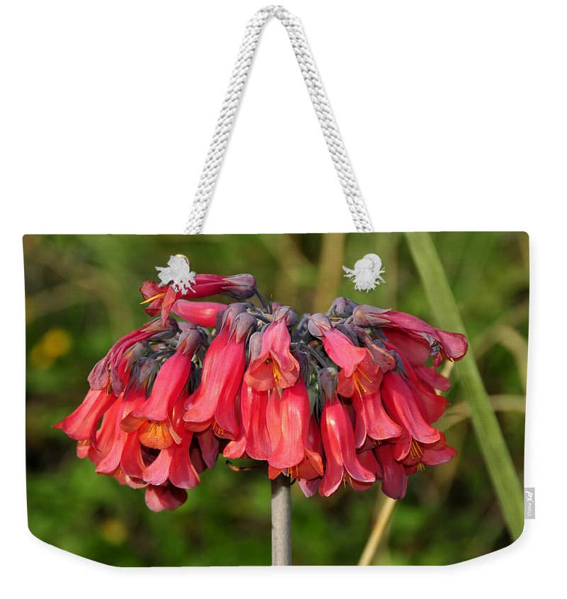 Fine Art Photography Weekender Tote Bag featuring the photograph Red Flowers by David Lee Thompson