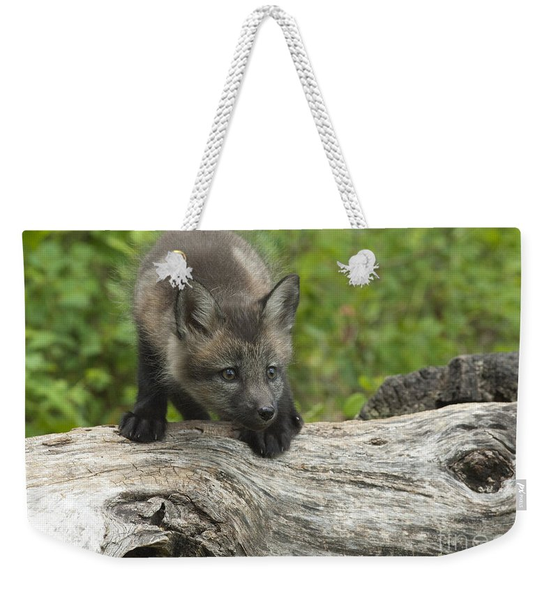 Bronstein Weekender Tote Bag featuring the photograph Red Fox Kit by Sandra Bronstein