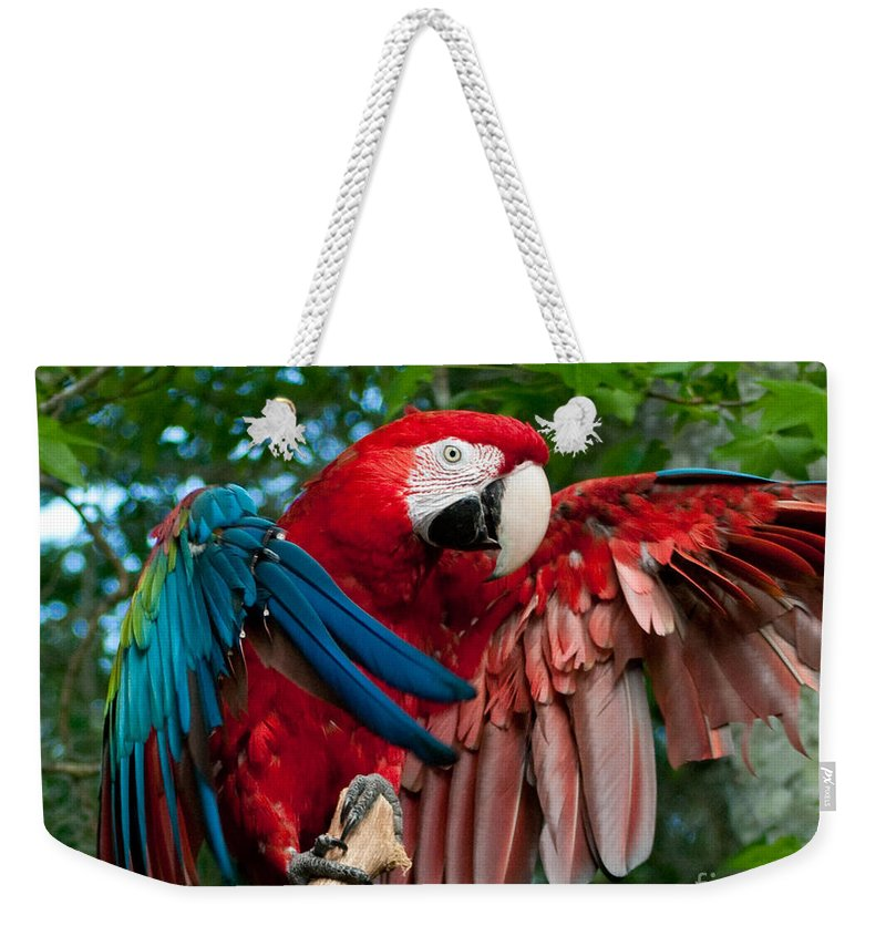 Red Weekender Tote Bag featuring the photograph Red Macaw by Stephen Whalen
