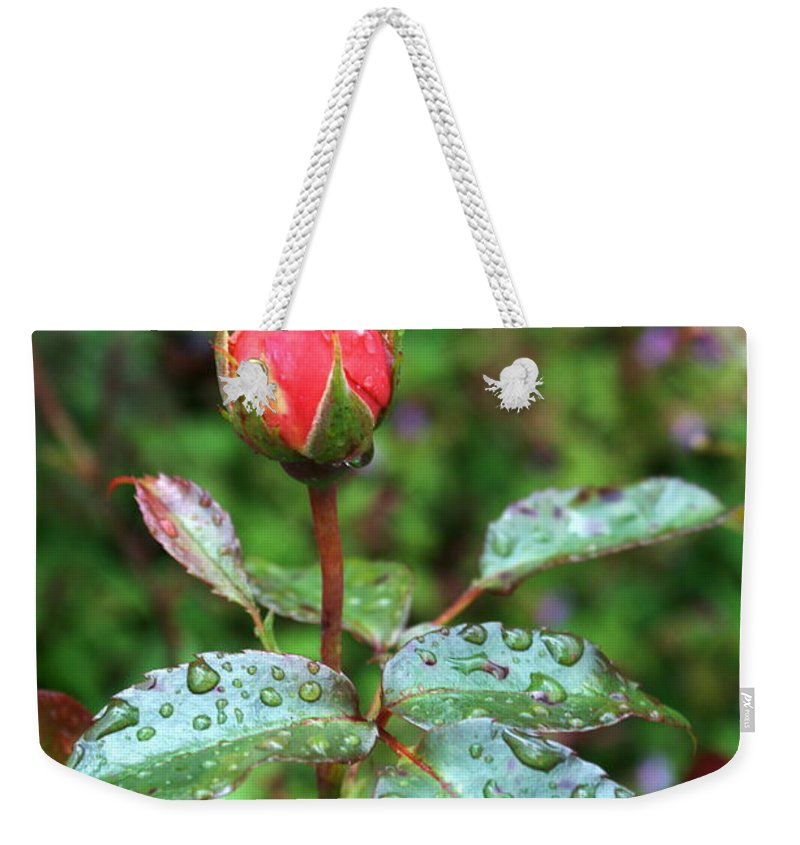 Red Rose Weekender Tote Bag featuring the photograph Red Rose by Chris Day