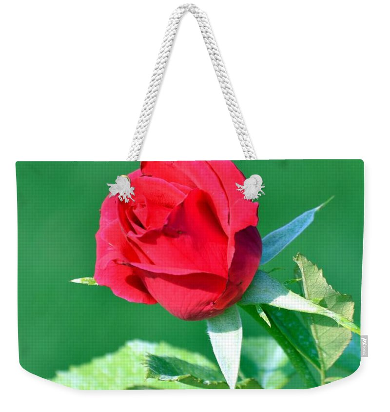 Rose Weekender Tote Bag featuring the photograph Red Rose With Star-shaped Collar by Maria Urso