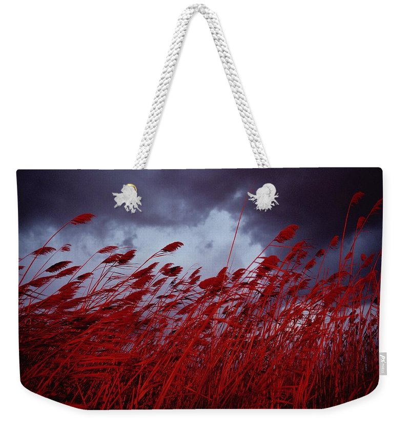 Sea Oat Grass Weekender Tote Bag featuring the photograph Red Sea Oats Blow In The Wind by Medford Taylor
